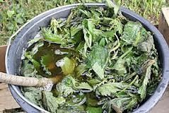 purin-feuilles